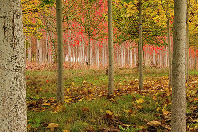 Photograph - Fall Color by Jean Noren
