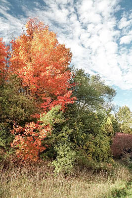 Photograph - Fall Colors by Nick Mares