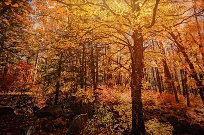 Photograph - Fall Colors  by Saija Lehtonen
