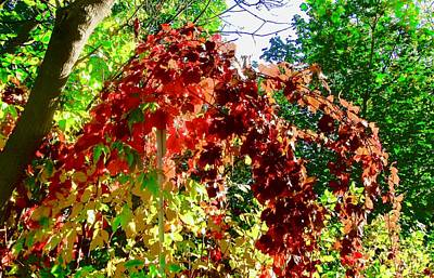 Photograph - Fall Colours by Stephanie Moore
