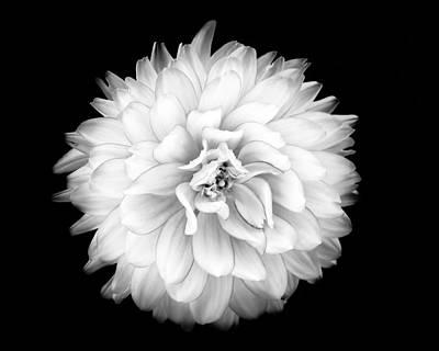 Photograph - Fall Dahlia by Louise Lindsay