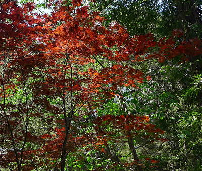 Photograph - Autumn Foliage by Denise Mazzocco