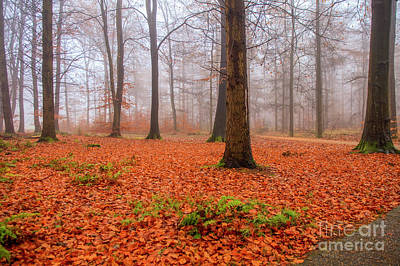 Photograph - Fall Foliage In Foggy Forest by Patricia Hofmeester