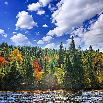 Algonquin Photograph - Fall Forest In Sunshine by Elena Elisseeva