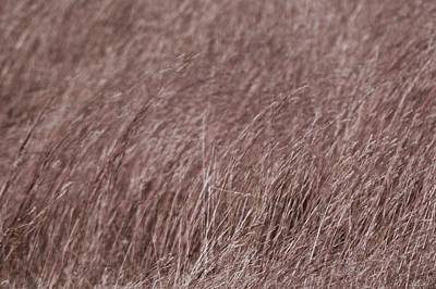 Photograph - Fall Grass by Tim Good