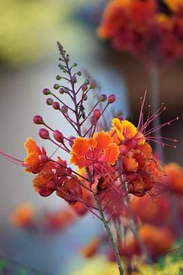 Photograph - Desert Fall Harvest by John Glass