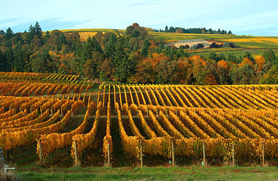 Fall In A Vineyard Art Print by Margaret Hood