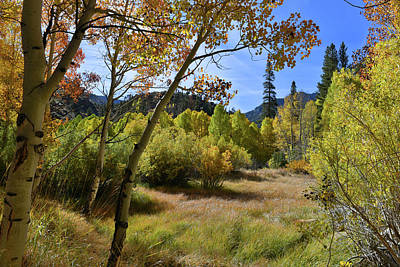Fall In Bishop Creek Art Print by Dung Ma