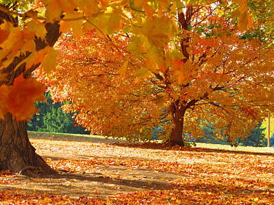 Rights Managed Images - Fall In the Park #6 Royalty-Free Image by John Diebolt