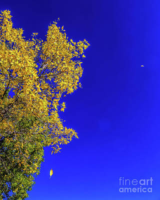 Photograph - Falling Leaves by Jon Burch Photography