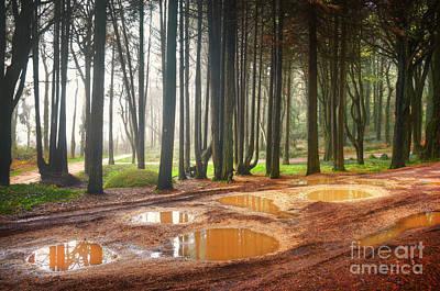 Mud Season Photograph - Fall Landscape by Carlos Caetano