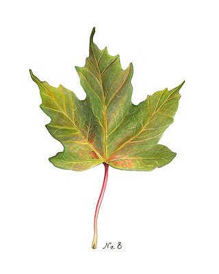 Old World Still Life Painting - Fall Leaf No. 8 by Kelsey Wilson