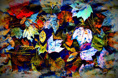 Photograph - Fall Leaves by Bill Howard