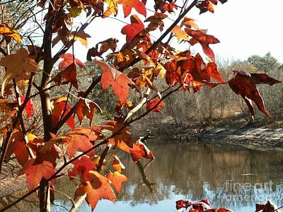 Fall On The Withlacoochee River Art Print