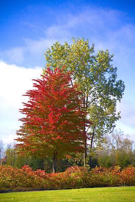 Fall Trees Original by Paul Bartoszek