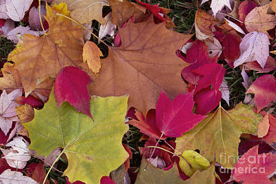 Different Colours Photograph - Fallen Autumn Leaves by Kenneth M. Highfill