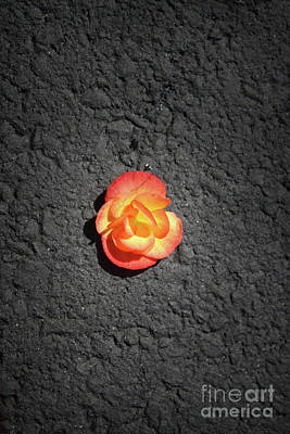Photograph - Fallen Flower by Paul Cammarata
