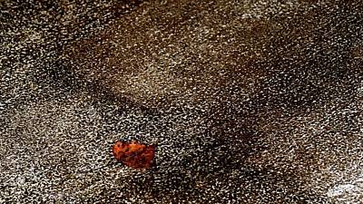 Photograph - Fallen Leaf by Jerry Sodorff