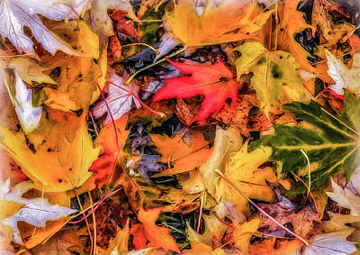 Photograph - Fallen Leaves by Dennis Bucklin