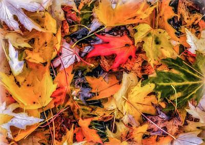 Photograph - Fallen Leaves by Dennis Bucklin