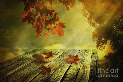 Still Life Royalty-Free and Rights-Managed Images - Fallen Leaves by Veikko Suikkanen