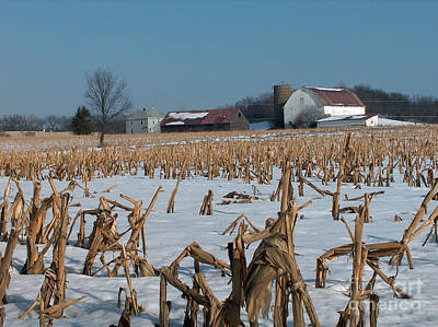 Photograph - Fallow Corn Field by Kevin McCarthy