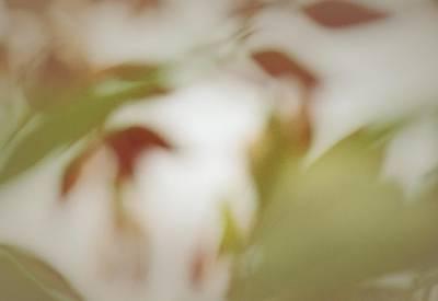 Photograph - Fall's Little Promise by The Art Of Marilyn Ridoutt-Greene