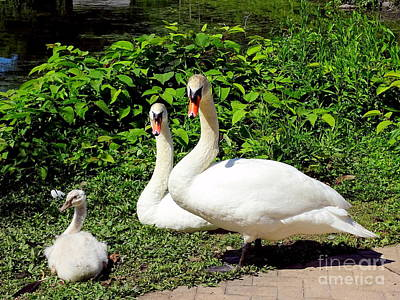 Photograph - Family Outing by Ed Weidman