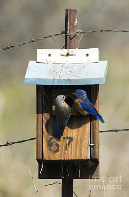 Bluebird Photograph - Family Time by Mike Dawson