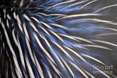Photograph - Fanciful Feathers by Alycia Christine