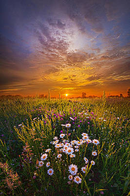 Daisy Photograph - Father's Day by Phil Koch