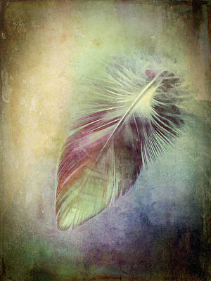 Photograph - Feather by Ann Powell