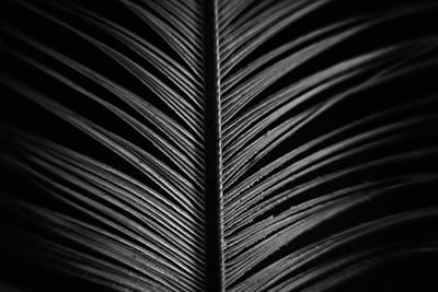 Photograph - Feather by Erica Kinsella