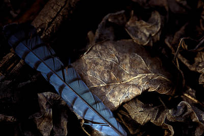 Photograph - Feather On Leaf by Jeff Phillippi