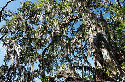 Photograph - Feathery Spanish Moss by Sally Weigand