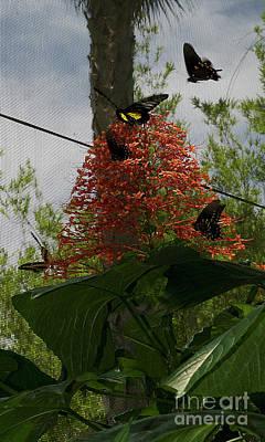 Flying Spider Photograph - Feeding Frenzy by Skip Willits