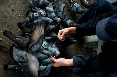 Photograph - Feeding The Pigeons by James David Phenicie