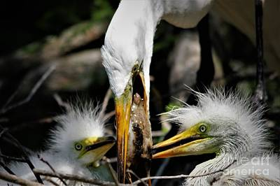 Photograph - Feeding Time by Paulette Thomas