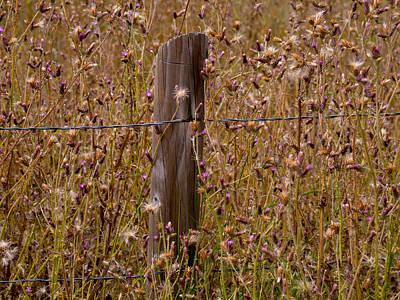 Photograph - Fenced In by Derek Dean