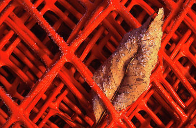 Photograph - Fenced In by Jim Vance