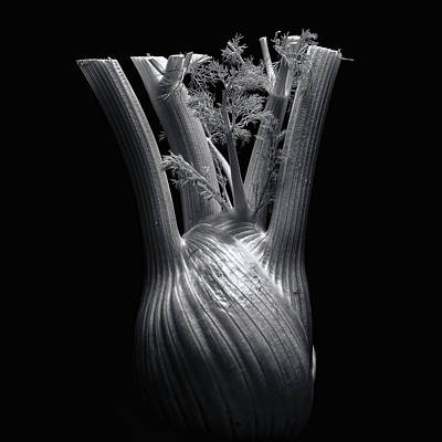 Photograph - Fennel by Wayne Sherriff