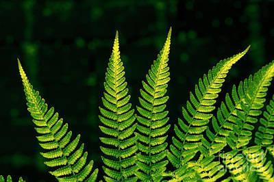 Photograph - Fern Close-up Nature Patterns by Jim Corwin