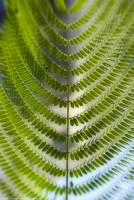 Photograph - Fern Plant by Isaac Silman