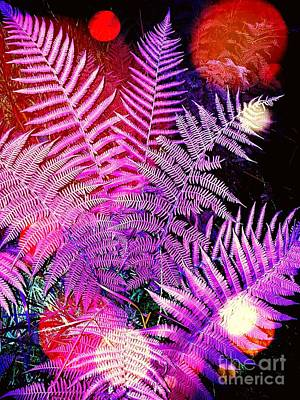Photograph -     Ferns by Daniel Janda