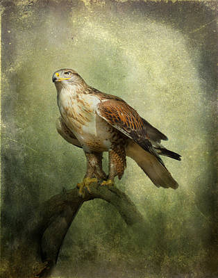 Photograph - Ferruginous Hawk by Barbara Manis