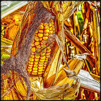 Photograph - Field Corn Ready For Harvest by Roger Passman