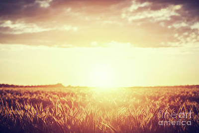 Photograph - Field, Countryside At Sunset. Harvest Time. Vintage by Michal Bednarek