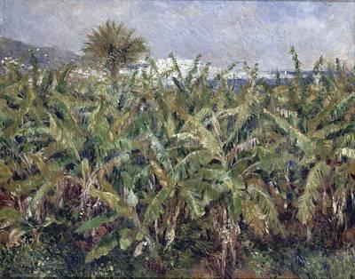 Painting - Field Of Banana Trees by Auguste Renoir