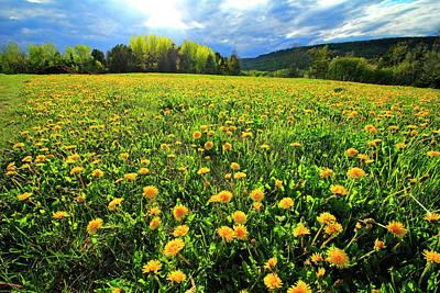Photograph - Field Of Dandelions by Gary Corbett