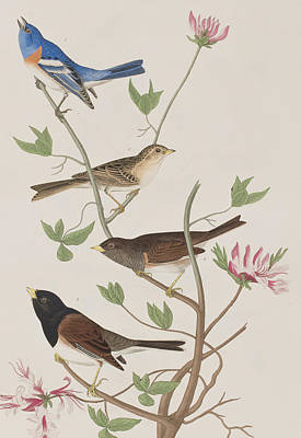 Pink Flower Branch Painting - Finches by John James Audubon